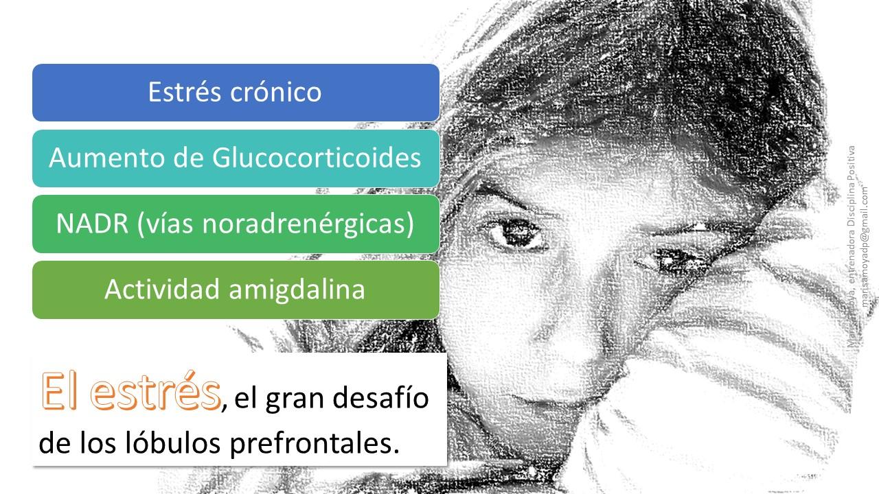 Diapositiva22 Disciplina Positiva y Plataforma de Profesionales de Tratamiento Familiar de Andalucía